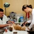 Buda-Vet Állatorvosi Rendelő