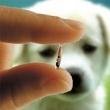 Hegyvidék Önkormányzata Állatorvosi Rendelő és Hivatal