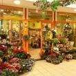 Natura Virág - Rózsadomb Center
