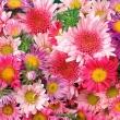 Hedera Virág-Ajándék - Széphalom Bevásárlóközpont