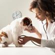 Focus-Vet Állatorvosi Rendelő