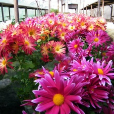 Civitan Kertészet