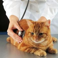 L. F. ANT Állatorvosi Rendelő