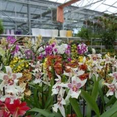 Oázis Kertészet - Pasarét