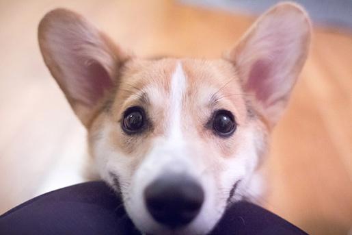 Fotó: dog time